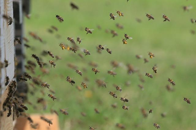 курсове по пчеларство