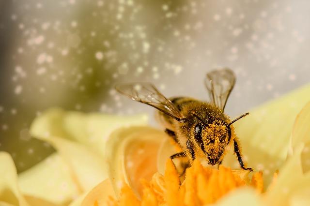 млад фермер пчеларство 2017 курс
