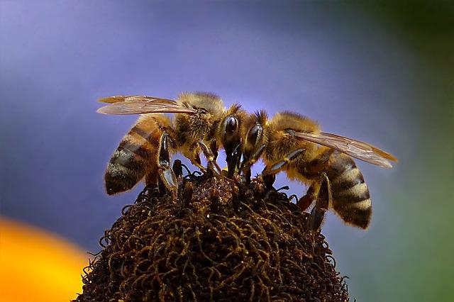млад фермер пчеларство 2017 обучение
