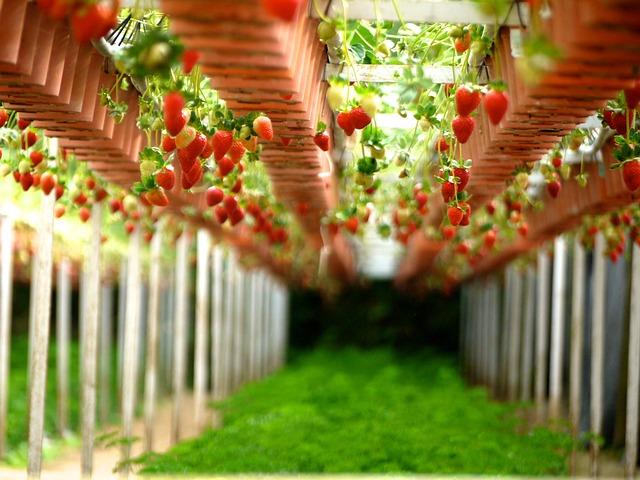 обучение за растителна защита
