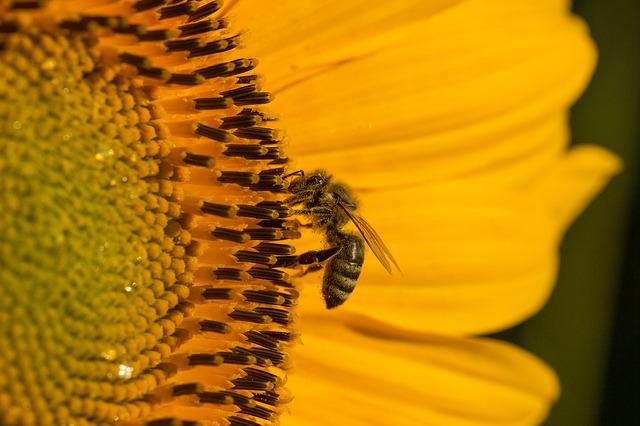 пчеларски курс 150 часа