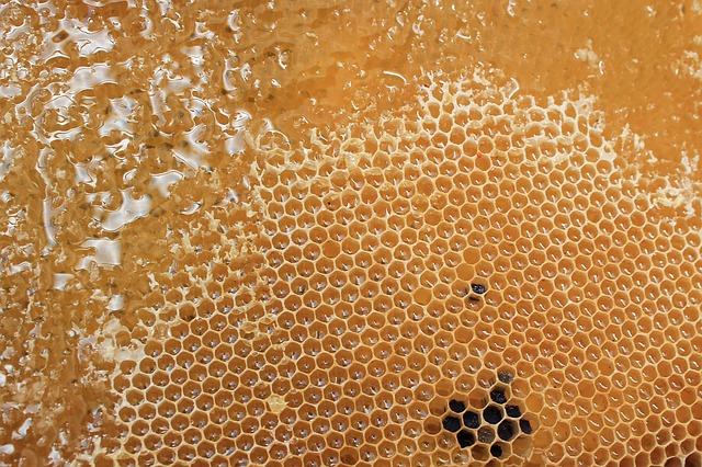 пчеларски курс