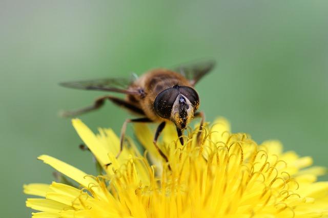 пчеларско обучение млад фермер 2017