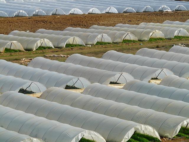 растителна защита бабх курс