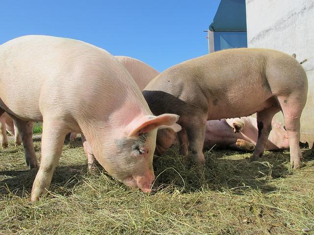 курс хуманно отношение свиневъдство 2020г