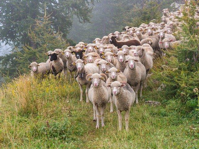 курс хуманно отношение с животните овцевъдство 2020г.
