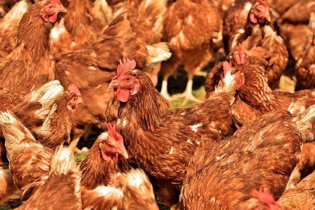 курс хуманно отношение с животните птицевъдство 2020г